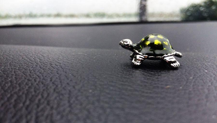 Stella! Turtle Walking Around