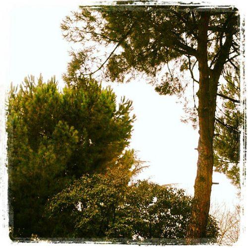 It's a Brand New Year Goodmorning Happyyear NewYear 2013 letsgo tree live