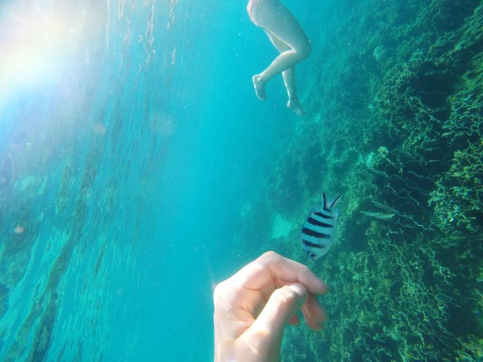 Cropped hand with fish in sea
