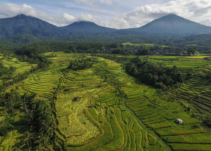 Jatiluwih and the landscape of Mount Batukaru Bali. Bali Bali, Indonesia Balinese Life Batukaru Drone  Jatiluwih Green Lan Jatiluwih Rice Terrace Lost In The Landscape Aerial Photography Agriculture Balinese Balinese Culture Beauty In Nature Growth Jatiluwih Landscape Lost In Landscape Mountain Nature Rice Paddy Scenics Sky Terraced Field Volcanic Landscape Volcano
