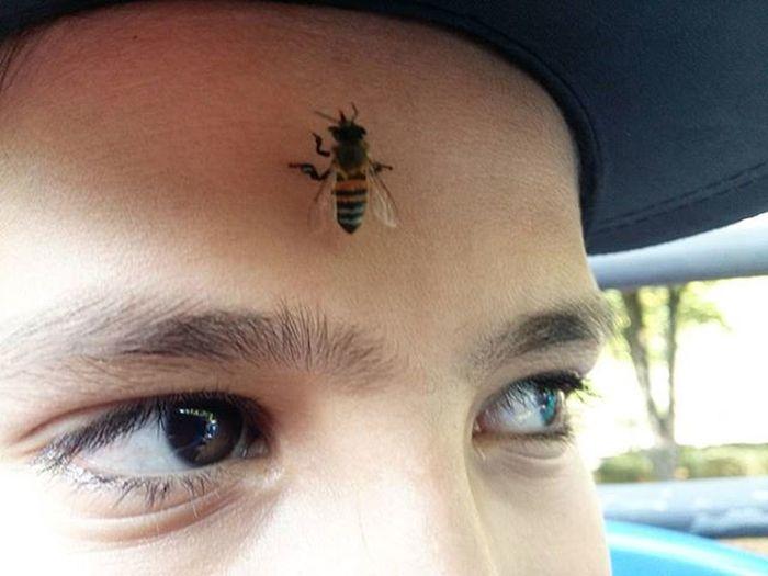 Observem o olhar! Kkk Insect Nature Children Son Bee Belohorizontemg Ig_minasgerais Igers_minasgerais Conhecaminas Visiteminasgerais Exploreminas Igminasgerais Naturelovers Zoologicobelohorizonte Abelha Uwn_insect Filho SamsungGalaxyA5 Magnifier