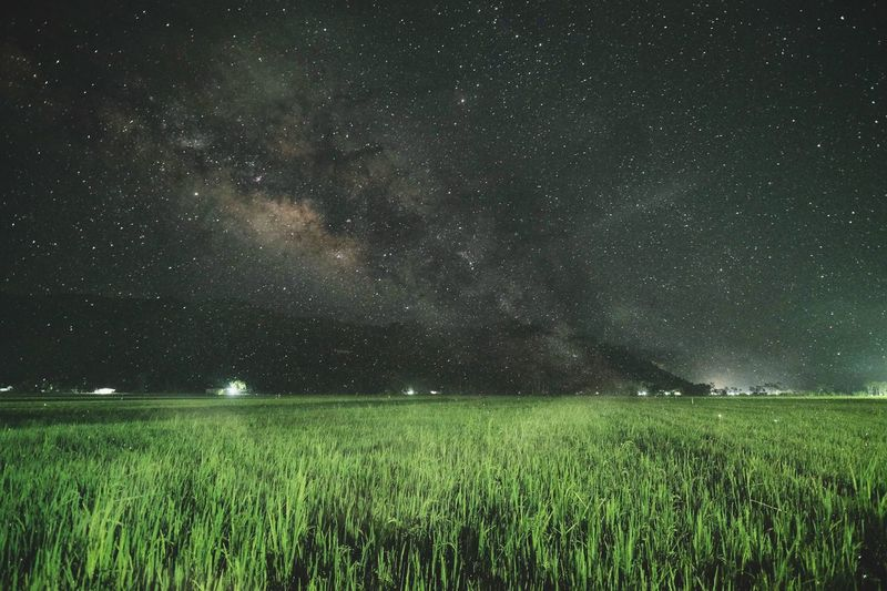Milkyway above rice field at Sirnoboyo Pacitan Pacitan Rice Paddy Night Space Beauty In Nature Scenics - Nature Star - Space Field Astronomy Landscape Plant Tranquility Land Star Field Growth Environment Sky Green Color Tranquil Scene Star No People Nature Capture Tomorrow