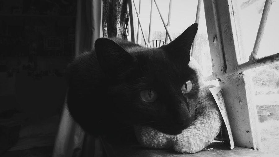 Black cat so sassy. One Animal Pets No People Indoors  Close-up Sentimental Photography EyeEmNewHere Fade Grunge Cat Cateyes Blackandwhite Blackcats Farm Life