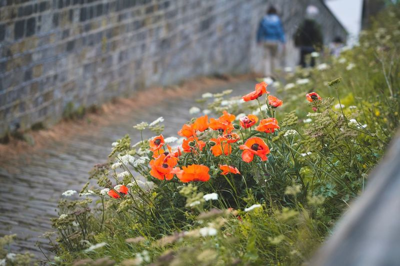 Close-up of flowering plants against wall
