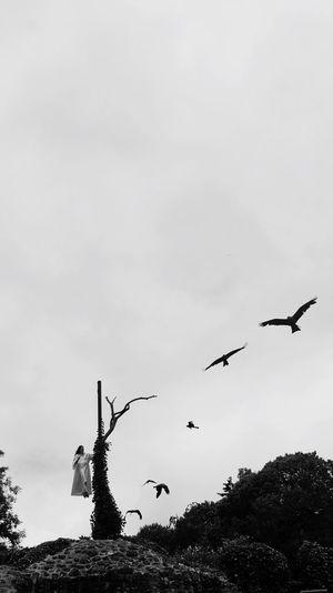 PuyDuFou Vendée Birds Blackandwhite