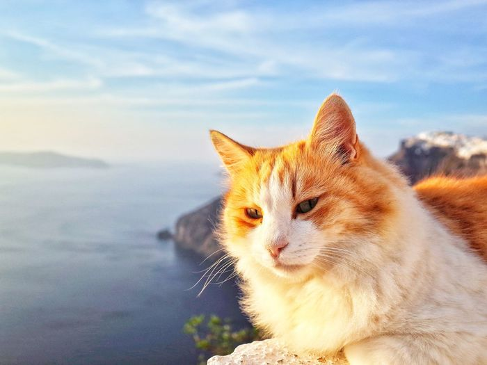 Hanging Out Taking Photos Check This Out Hello World Cheese! Relaxing Hi! Enjoying Life Santorini, Greece Travel Destinations Sky Outdoors Seaside Blue Greece No People Blue Sky Hill Water Cat