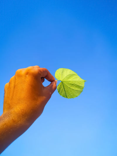Low angle view of hand holding leaf against clear blue sky