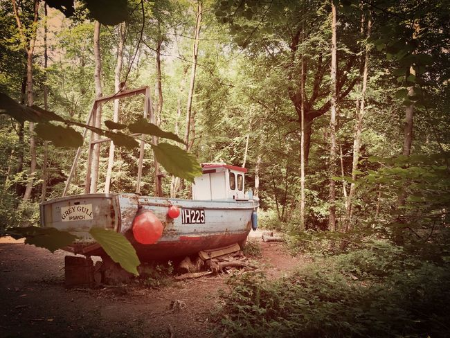 Forest Boats Boat Woods Abandoned