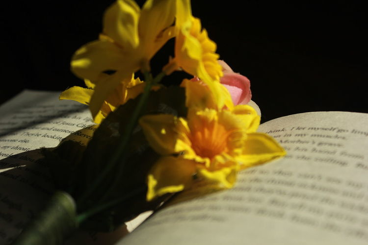 So scared to lose you... Flowers Book Allthebrightplaces Reading Sadness Wordsoftruth Dontexist Photography Macro Photography Fakeflowers
