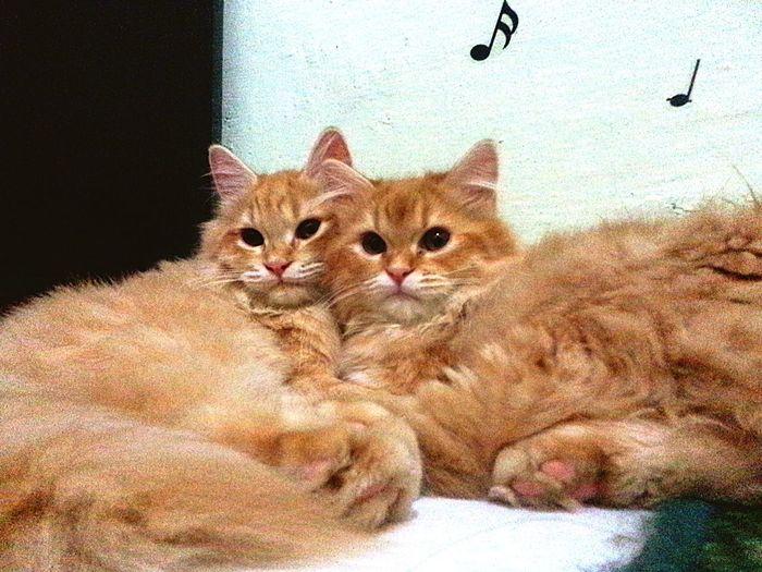 Twin Cat Cute Pets Cattivo  Orro Kittiesofinstagram Lovey Cat Pet Photography