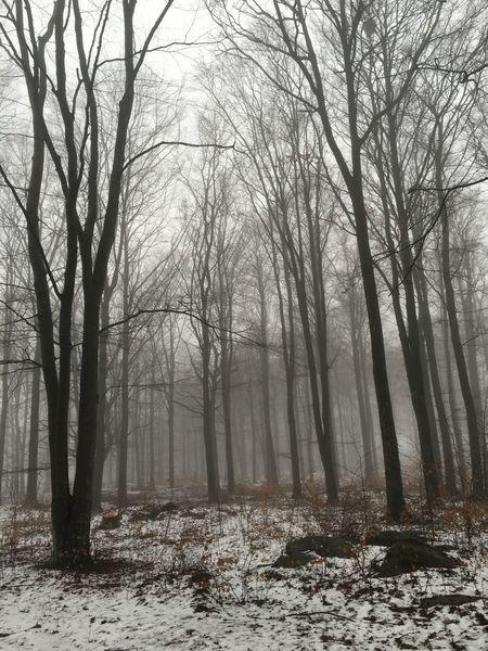 Foggy Day Walking Around Winter