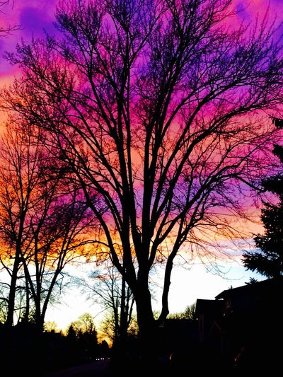 Beauty In Nature Sunset Purlpe Pink Orange Tree First Eyeem Photo