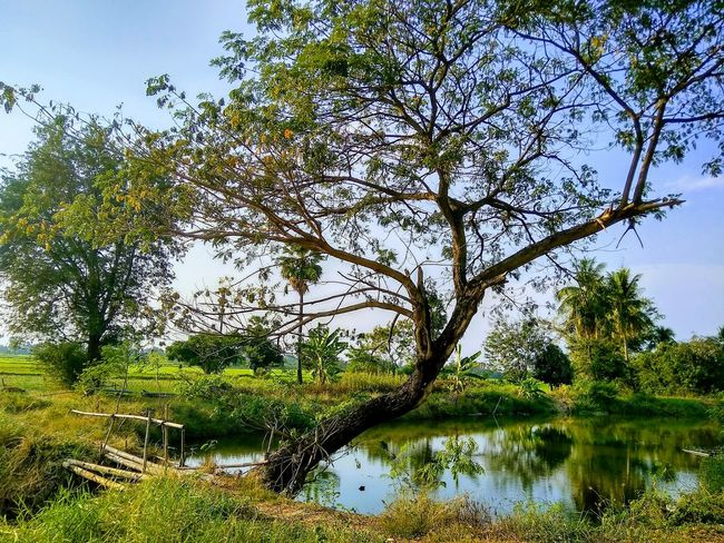 Nature Tree Water Branch Lake Reflection Sky Green Color Countryside