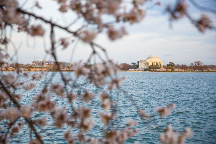 Beauty In Nature Blossom Blue Cherry Cherry Blossoms Columbia Day District District Of Columbia Jefferson Memorial Landmark Landmarks Monument No People Outdoors Pink Spring Tree United States Washington Washington DC Washington Monument Washington, D. C. Water