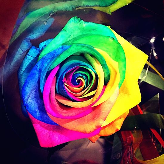 🌈🌹 Roses RainbowRose Instamoments Loveyou Enjoying Life Moments Photography Flowers Flowerporn Loveit Bestoftheday Colors Colorful Followme Likeforlike