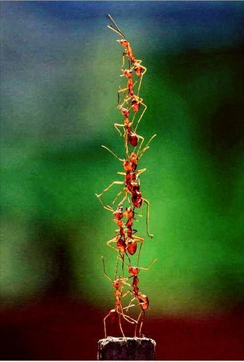 Ants Insect Green Color Outdoors Nature Close-up Animal Themes