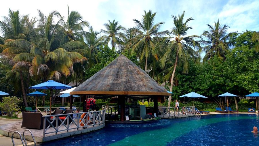 @the Resort with the Wildlife Tree Water Swimming Pool Luxury Hotel Sky Architecture Parasol Sun Lounger Outdoor Cafe Thatched Roof Deck Chair Stilt House Outdoor Chair Sunshade Canopy Beach Umbrella Stilt Resort Lounge Chair Gazebo Shelter