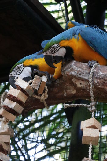 Low angle view of birds perching on wood