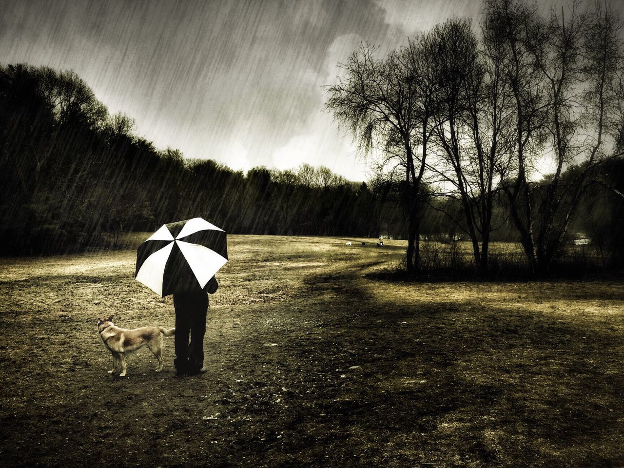 Rear View Of Man Holding Umbrella And Standing With Dog On Field During Monsoon
