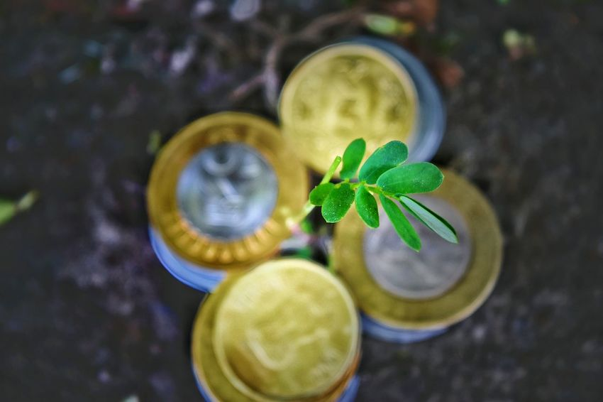 Rupees Tree Climate Environment Drink Leaf Drinking Glass Mint Leaf - Culinary Close-up Plant Green Color Matcha Tea Mojito Lemon Tree Fruit Juice Lemon Soda Tree Trunk Relaxing Moments Growing Tonic Water Lemon Blooming Juicer Branch GIN Lemonade Carbonated Ice Cube Cocktail Vodka The Creative - 2018 EyeEm Awards