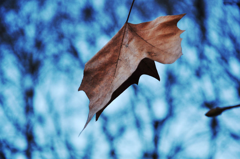 17.62° Tree Leaf Autumn Bare Tree Branch Bird Close-up Animal Themes Sky Dead Plant Dead Tree Dried Plant Dry Leaves Fallen Leaf Fallen Fall