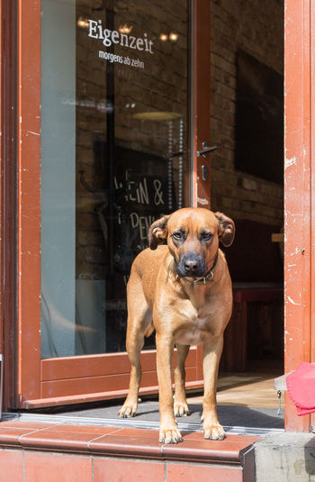 Architecture Building Exterior Canine Day Dog Domestic Domestic Animals Door Doorway Entrance Looking At Camera Mammal No People One Animal Pets Portrait Vertebrate
