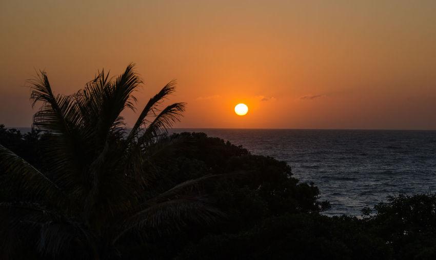 Beauty In Nature Horizon Over Water Meer No People Non-urban Scene Ocean Orange Color Palm Tree Palmen Sea Sea View Sonnenuntergang Sun Sunset Water