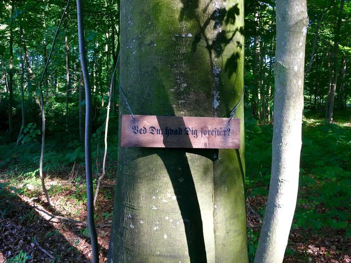 Mathias Winther Beauty In Nature Close-up Communication Danish Language Day Forest Growth Nature No People Outdoors Poetry Sanderumgaard Sign On Tree Signboard Text Tree Tree Trunk