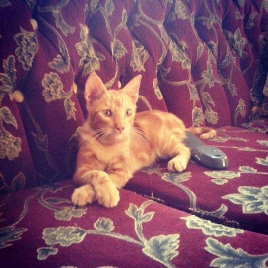 Edam es un hermoso gatito de 4 meses aprox. que aún espera un hogar para poder vivir el tan anhelado 'felices para siempre'... Más info 6203-7988 Adoptaunamigo Adoptanocompres Catlover