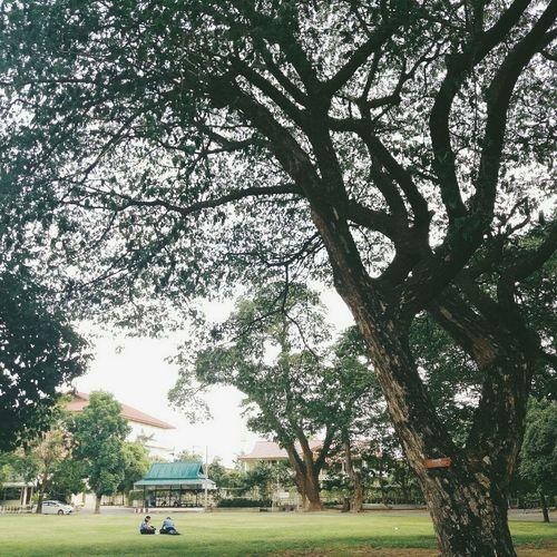อบอุ่นและคุ้นเคย ❤ Tree Grass Growth Nature Green Color Outdoors Sky Beauty In Nature First Eyeem Photo