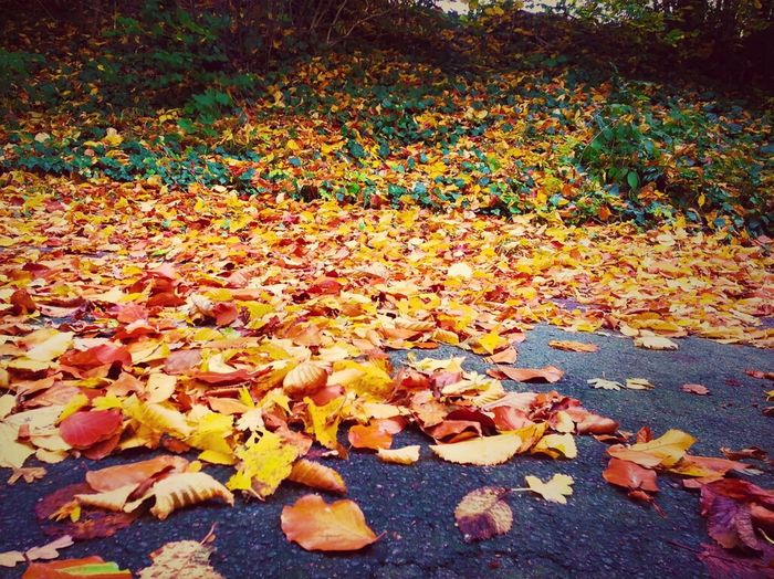 Nature Natur Fall Herbst Laub Pics By Mr_badabing Leafes