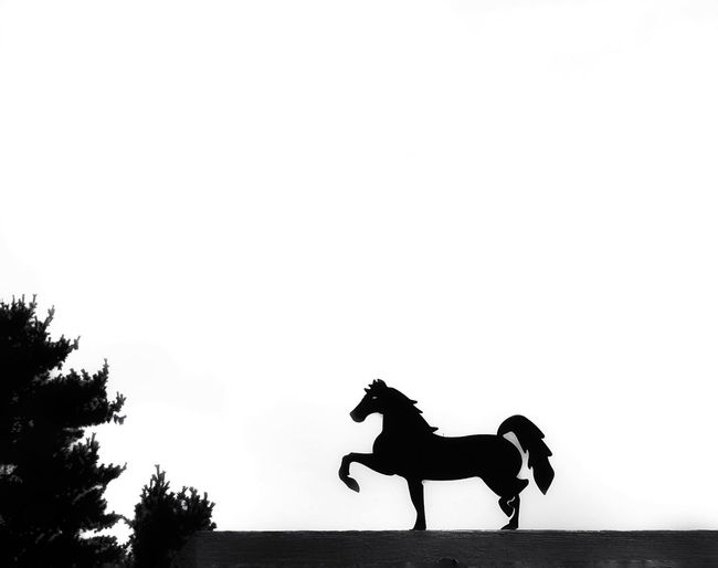 Simplicity in Blackandwhite Horse Silhouette Animal Representation Animal Themes One Animal Clear Sky