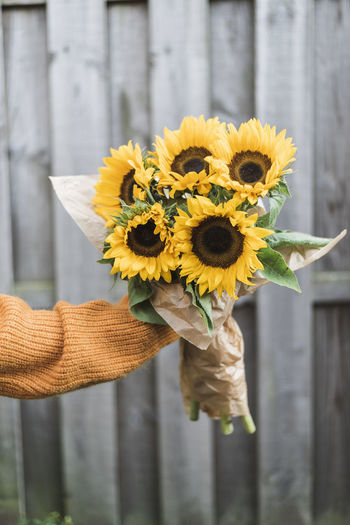 Cropped hand holding sunflowers against fence