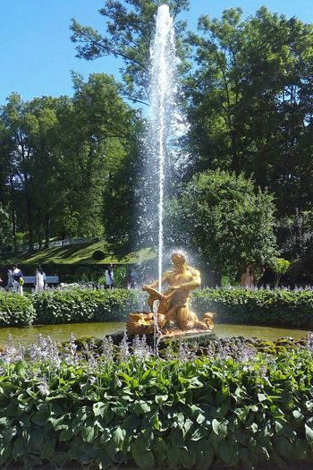 Growth Nature Day Outdoors Tree Plant No People Spraying Beauty In Nature Water Freshness Sky Petergof Sculpture Museum Питер Питер ❤️ St. Petersburg Russia Gold Architecture Water Park History Royalty