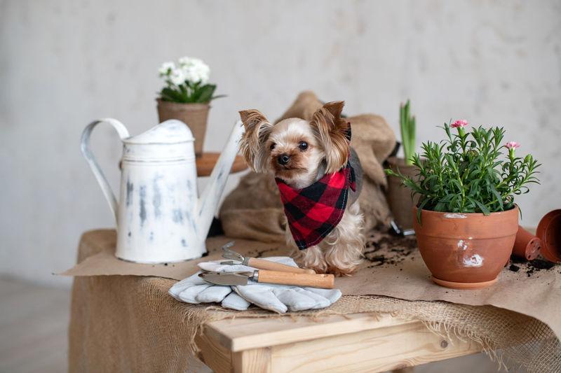 Portrait of dog in flower pot