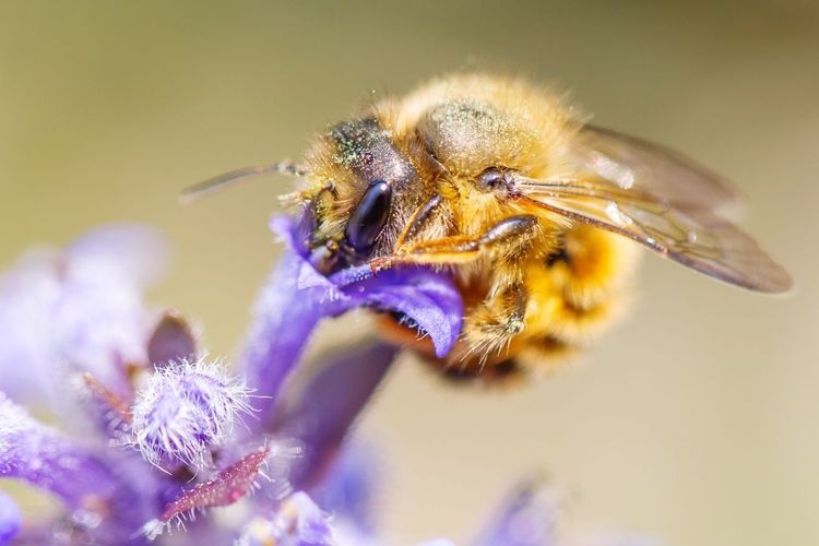 I'm a Beeliever Bee Goodmorning Breakfast Cute Hanging Out Taking Photos Macro_collection Macro Bees