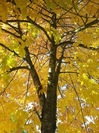 Fall Beauty Fall Fallleaves Beautiful Nature Trees Outside Freshair FavoriteSeason