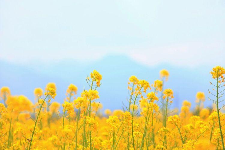 Springtime has come. It's also come to the mountain village. Landscape Nature EyeEm Best Shots - Landscape EyeEm Nature Lover EyeEm Best Shots - Nature Flowers Spring Bokeh ISOPIX Dedicate To @intreccio