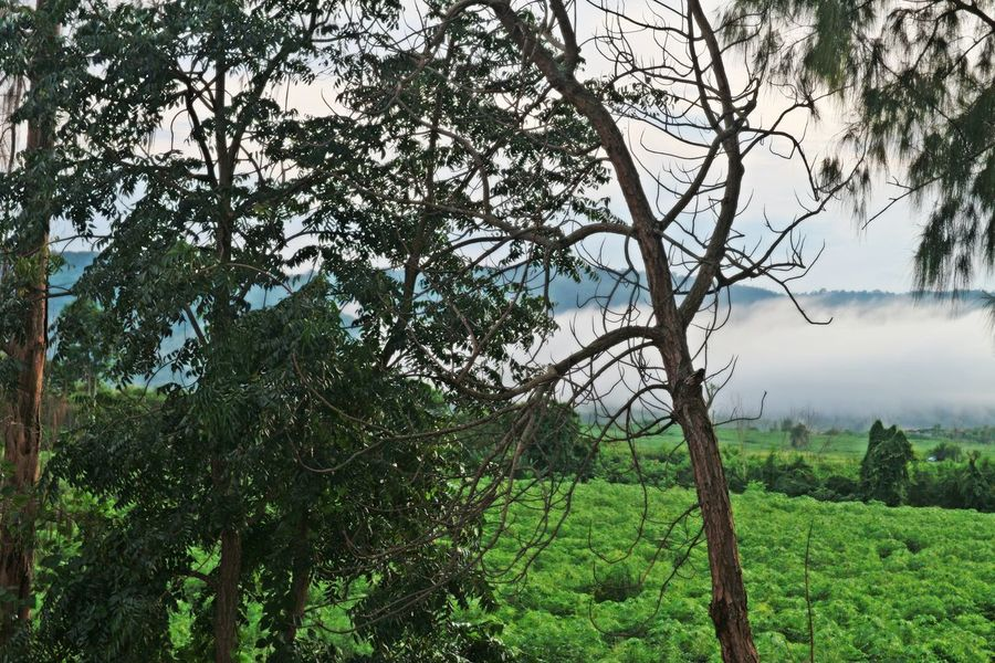 Seafog View Beauty In Nature Branch Day Forest Green Color Growth Landscape Mist Mountain Nature No People Outdoors Scenics Sky Tranquil Scene Tranquility Tree Tree Trunk
