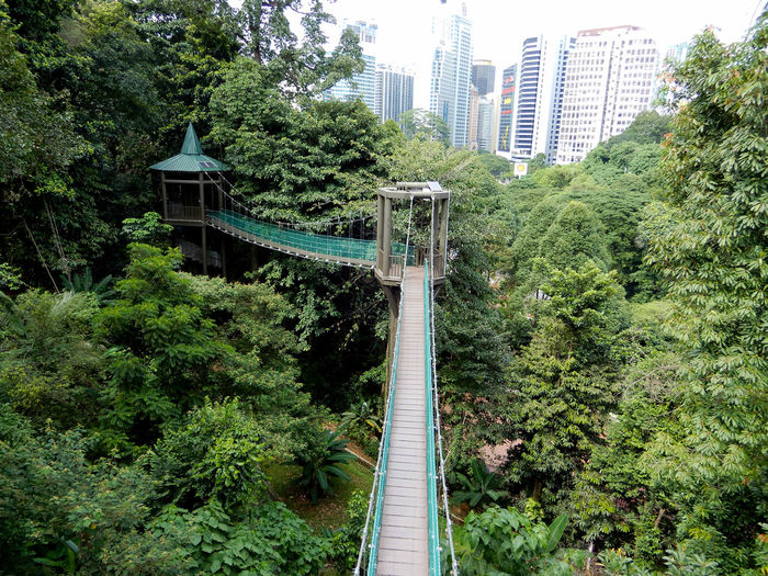Canopy walk Architecture Canopy Walk City Day Growth Nature No People Outdoors Tree