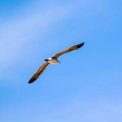 Flying Fly Bird Uccello sky cielo gabbiano