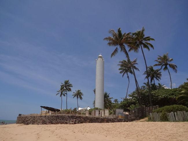 Beach Beacon Coconut Tree Lighthouse Paradise Paradise Beach Sea Sunset