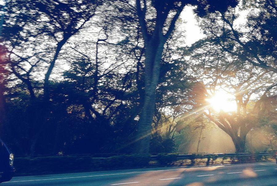Morning Sunrise Highway Sunlight Road Trees Aye  Singapore