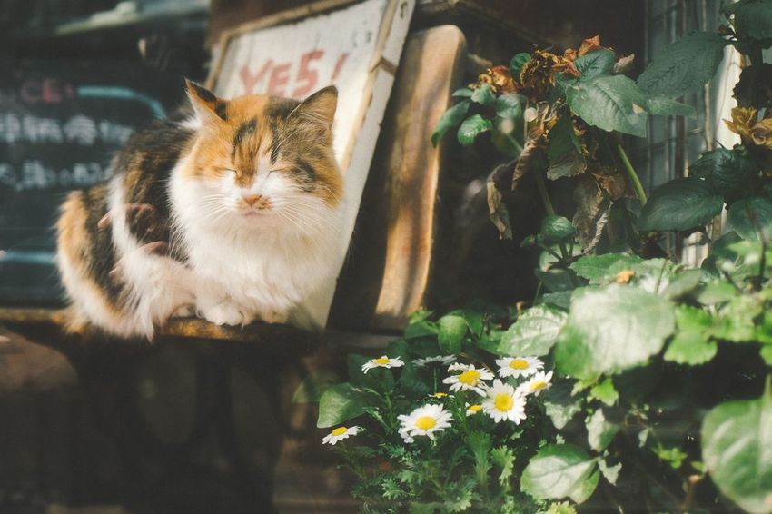 Animal Themes Domestic Cat Domestic Animals One Animal Pets Mammal Feline Flower Plant Outdoors No People Close-up