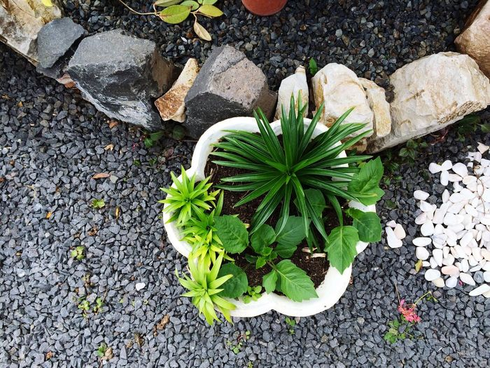 Plants with gravels at lawn