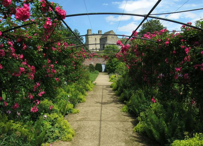 Helmsley Walled Garden and Castle Castle Helmsley Walled Garden Castle Ruin Flower Flowers Gardens Helmsley No People Paved Path Pergola Roses Summer