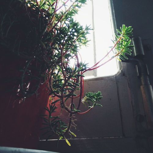 Growing and Spreading ! Indoor_plant Green vscocam