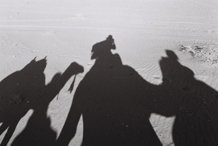 Shadow of person with camel on sand
