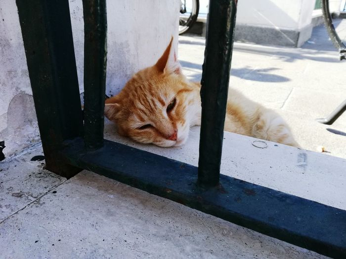 Close-up of ginger cat lying down by railing