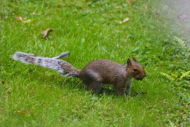 Squirrel Nuts Canon 70d Canon